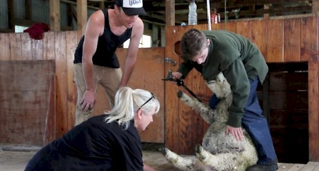 YMCA tutor Suzzy Thomas and farm manager Kane Gillan teach Ben Frost, 16, how to dag a sheep.